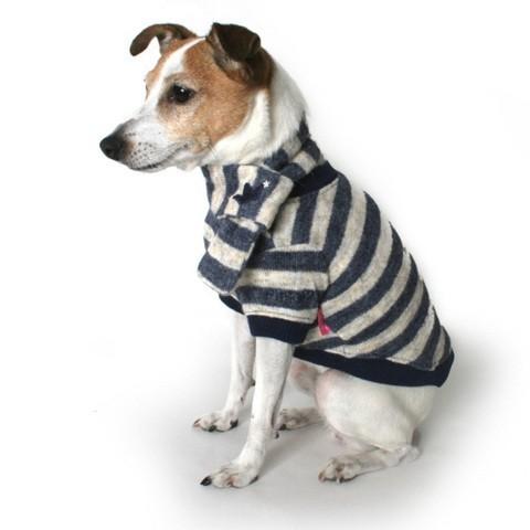 Vêtements pour chiens : des chandails trendy et confortables pour un hiver bien au chaud