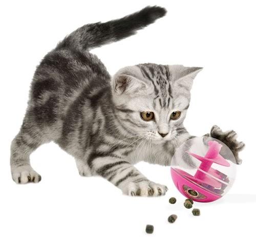 distributeur friandises pour chat