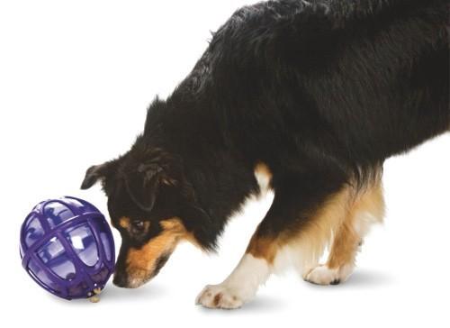 distributeur friandises pour chien