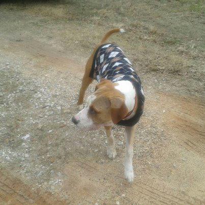 Buck, ou le fabuleux destin d'un chien luttant pour sa vie