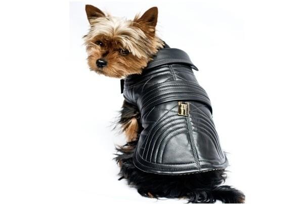 chiens actu vetements pour des manteaux tres luxueux nos toutous