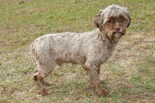 Tonik, le chien très humain qui émeut le web (Photos)