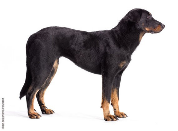 chien amabassadeur du salon de l'agriculture