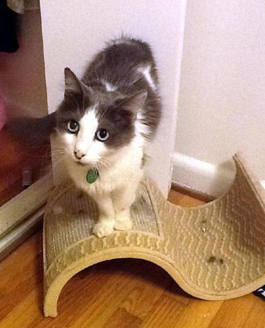 Milagra, le chat miraculé qui porte si bien son nom