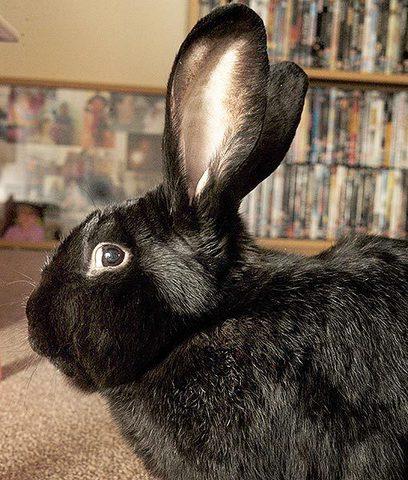Comment le lapin Toby est devenu le héros de sa famille