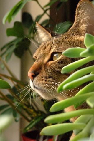 10 plantes toxiques pour les chats et les chiens soigner son chat wamiz. Black Bedroom Furniture Sets. Home Design Ideas