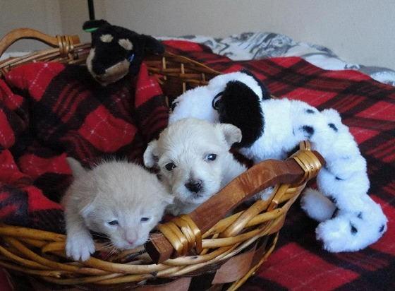 Un chiot et un chaton abandonnés deviennent de vrais frères