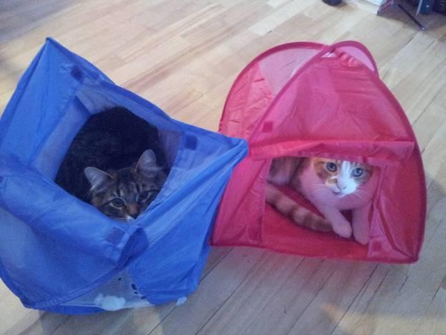 Ce chat n'est pas près de faire du camping ! (Photos)