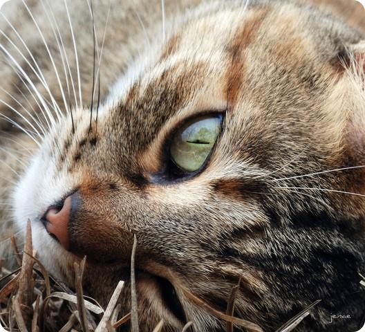 Comment réussir les photos de vos animaux ?