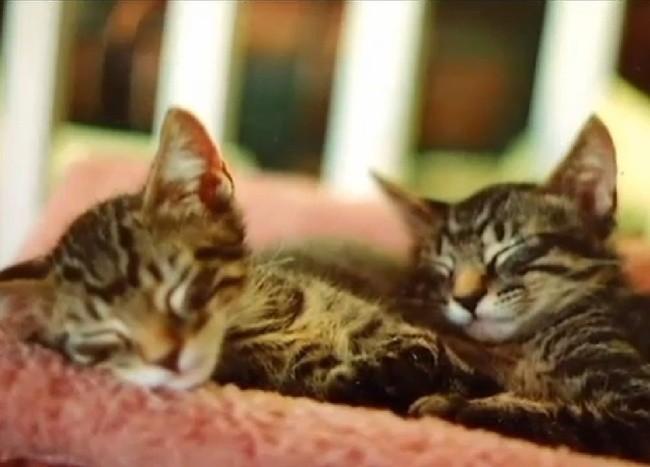 Incroyable : un chat retrouve sa famille 13 ans après sa disparition