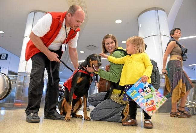 des chiens pour apaiser les voyageurs stressés