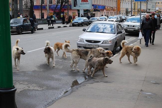 La Russie tente d'éliminer 2000 chiens et chats errants