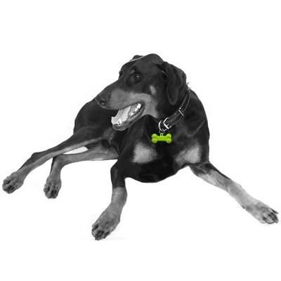 médaille pour chien