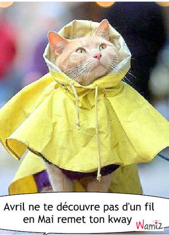 Cats With Umbrellas Gifs