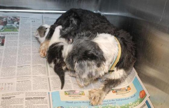 Une chienne sauve un chaton, et devient sa maman !