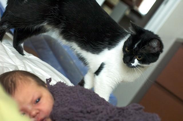 préparer le chat à l'arrivée d'un bébé