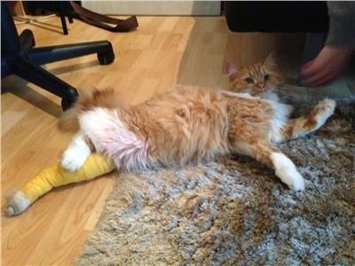 Un chat sauvé grâce à la mobilisation des internautes