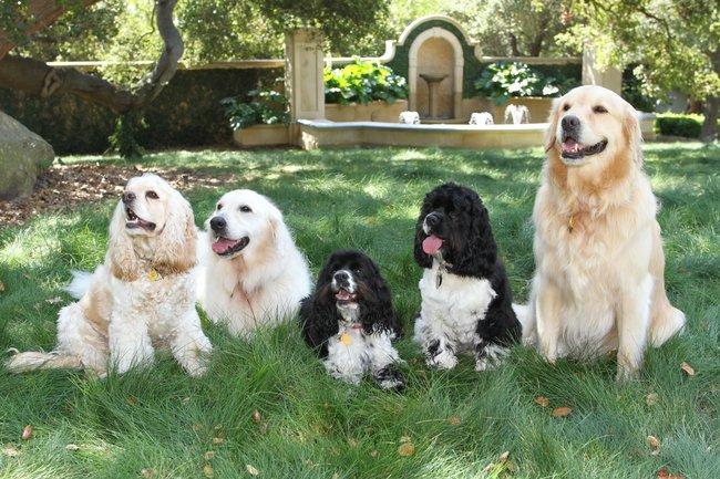 Luke, Layla, Sunny, Sadie, Lauren