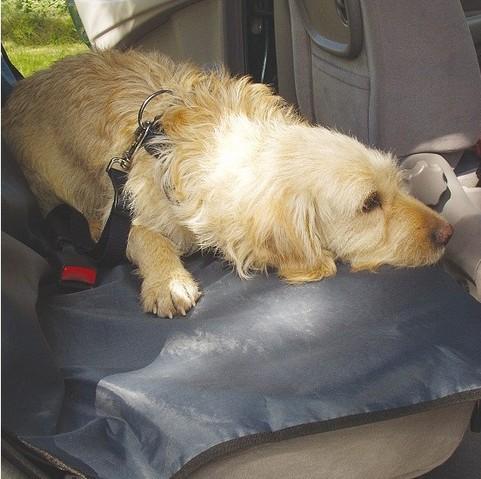plaid chien voiture