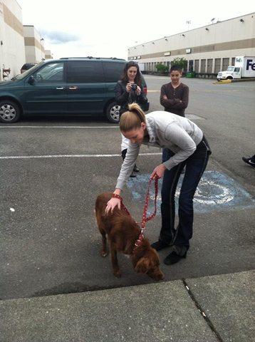 L'histoire de Chile Dog, ou l'incroyable sauvetage d'un chien errant