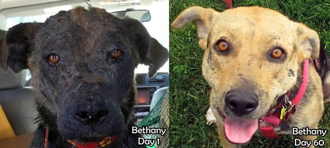 Poignant : le sauvetage et la métamorphose d'une chienne errante