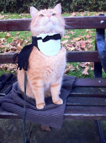 Un chat des rues nommé Bob, superbe histoire enfin publiée en France