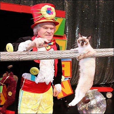 Cirque de chats de Moscou