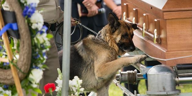 Une photo d'un chien devant le cercueil de son maître fait le tour du monde