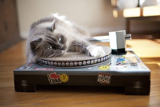 Des griffoirs pour chats et maîtres stylés