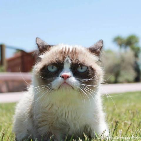 grumpy cat chat star