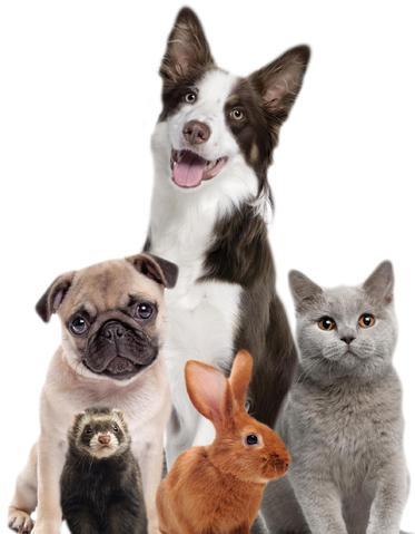 Radio Santé Animale : la 1ère webradio dédiée aux animaux de compagnie