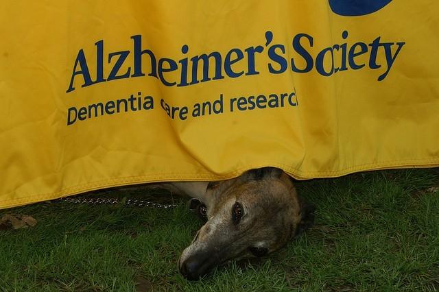 Alzheimer's Society : recherche pour la démence