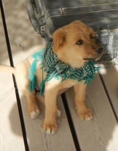 le sauvetage d'un chien errant d'Afghanistan