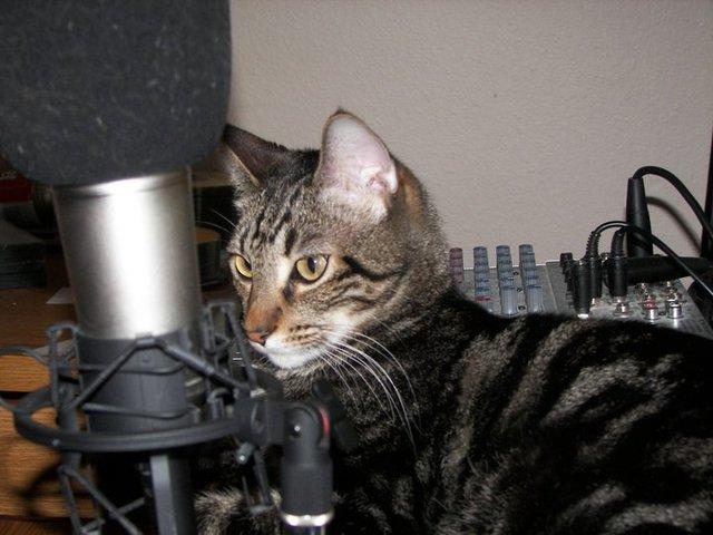 Cat Galaxy : une radio rien que pour les chats