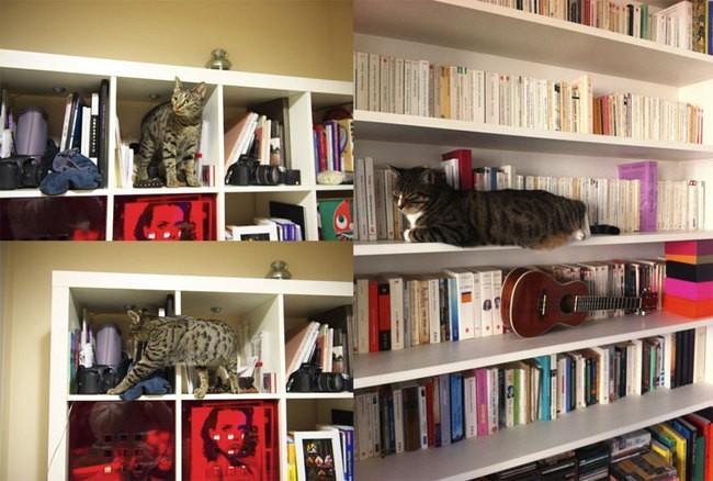 Quand la bibliothèque se fait aussi arbre à chat