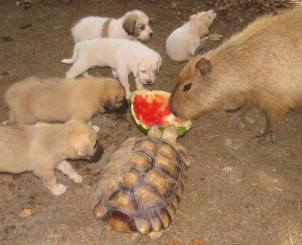 Cheescale, les chiots et la tortue du Rocky Ridge Refuge