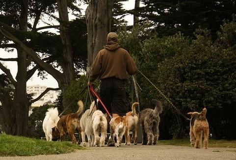 6 idées pour faire le bonheur de son chien pendant l'été