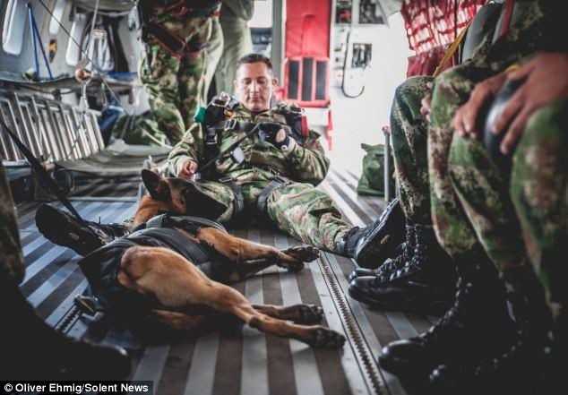 Jany, le chien de l'armée de l'air qui saute en parachute