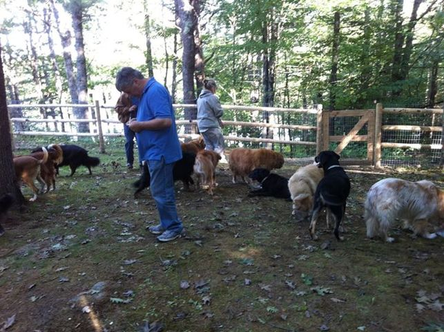David Rosenfelt, l'écrivain qui a sauvé 4 000 chiens