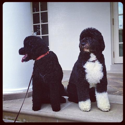 Pourquoi les Obama ont-ils adopté un 2ème chien ?