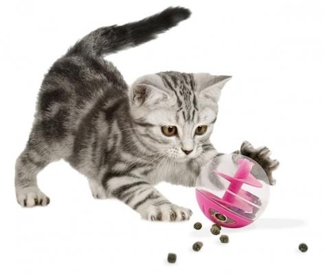 8 accessoires pour la rentrée de votre chat