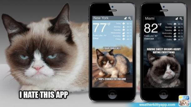 Application Weather Kitty Grumpy Cat