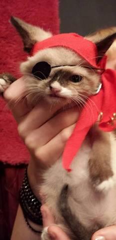 Sir Stuffington, le chaton miraculé qui émeut le web