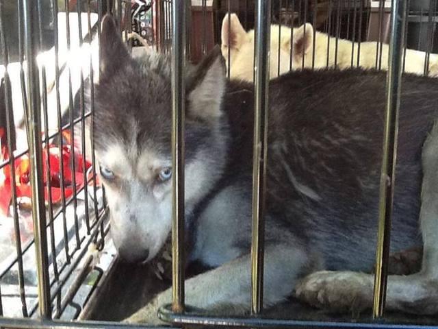 Une femme dévorée par les chiens qu'elle maltraitait
