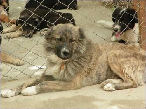 L'histoire de Wylie : des combats de chiens aux concours canins