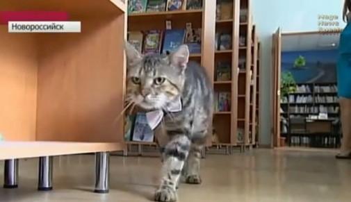 Kuzya, le chat devenu assistant bibliothécaire