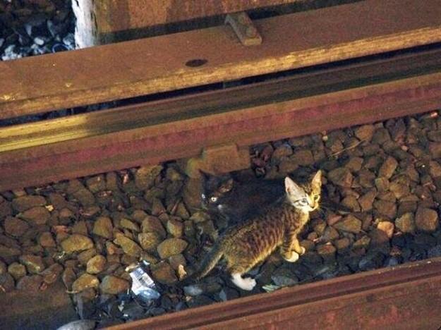 Le métro new-yorkais arrêté par 2 chatons