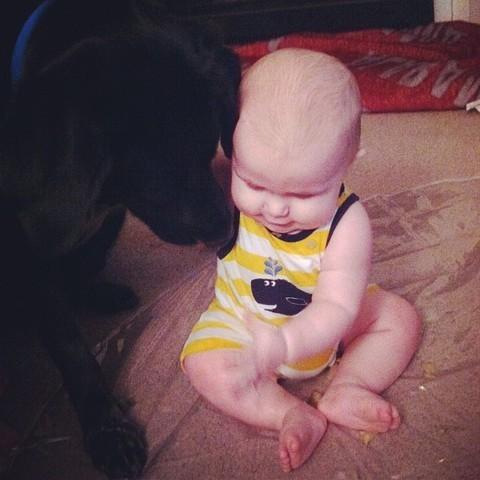 Un chien sauve un enfant maltraité par sa baby-sitter
