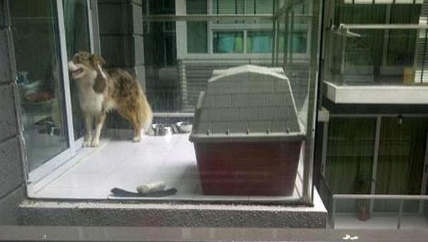 chien enfermé sur un balcon