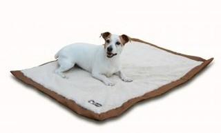 6 accessoires pour la rentrée de votre chien